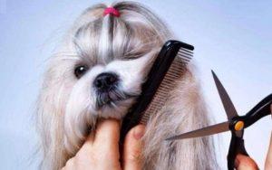 Мини бизнес стрижка собак