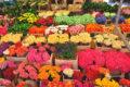 Как открыть цветочный бизнес