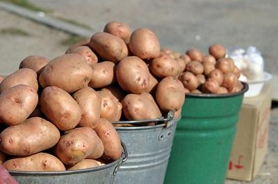 Купля-продажа картофеля