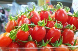 Выращивание томатов черри в закрытом грунте
